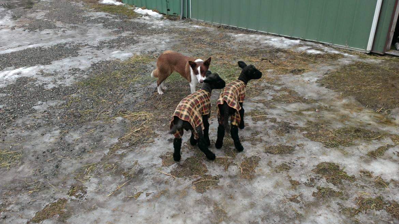 Idaho Dog Laws:  Fido has room to run!