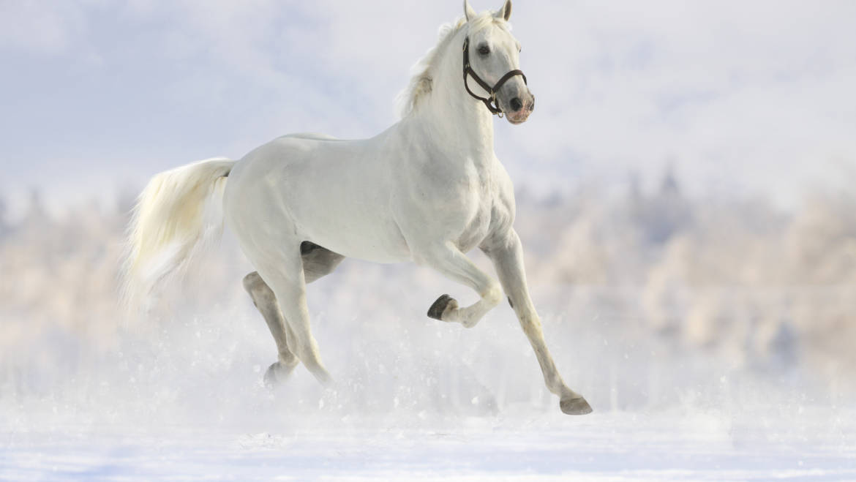 Winter Horse Care in North Idaho